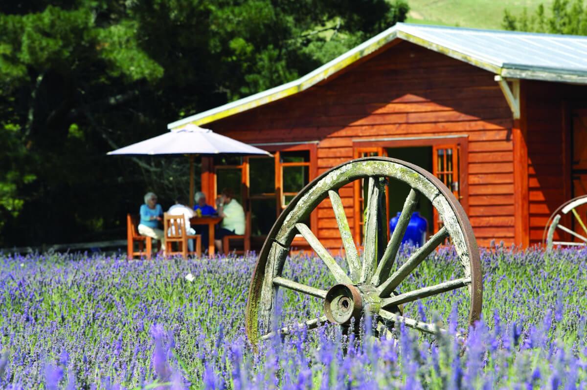 Laurens Lavender Farm